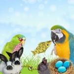 Les animaux mascottes de Pâques en 2013
