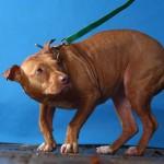 Causes et symptômes de la peur chez le chien