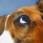 Comment faire cesser la peur chez le chien ?
