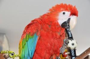 Les bases de l'éducation et de l'apprentissage des perroquets