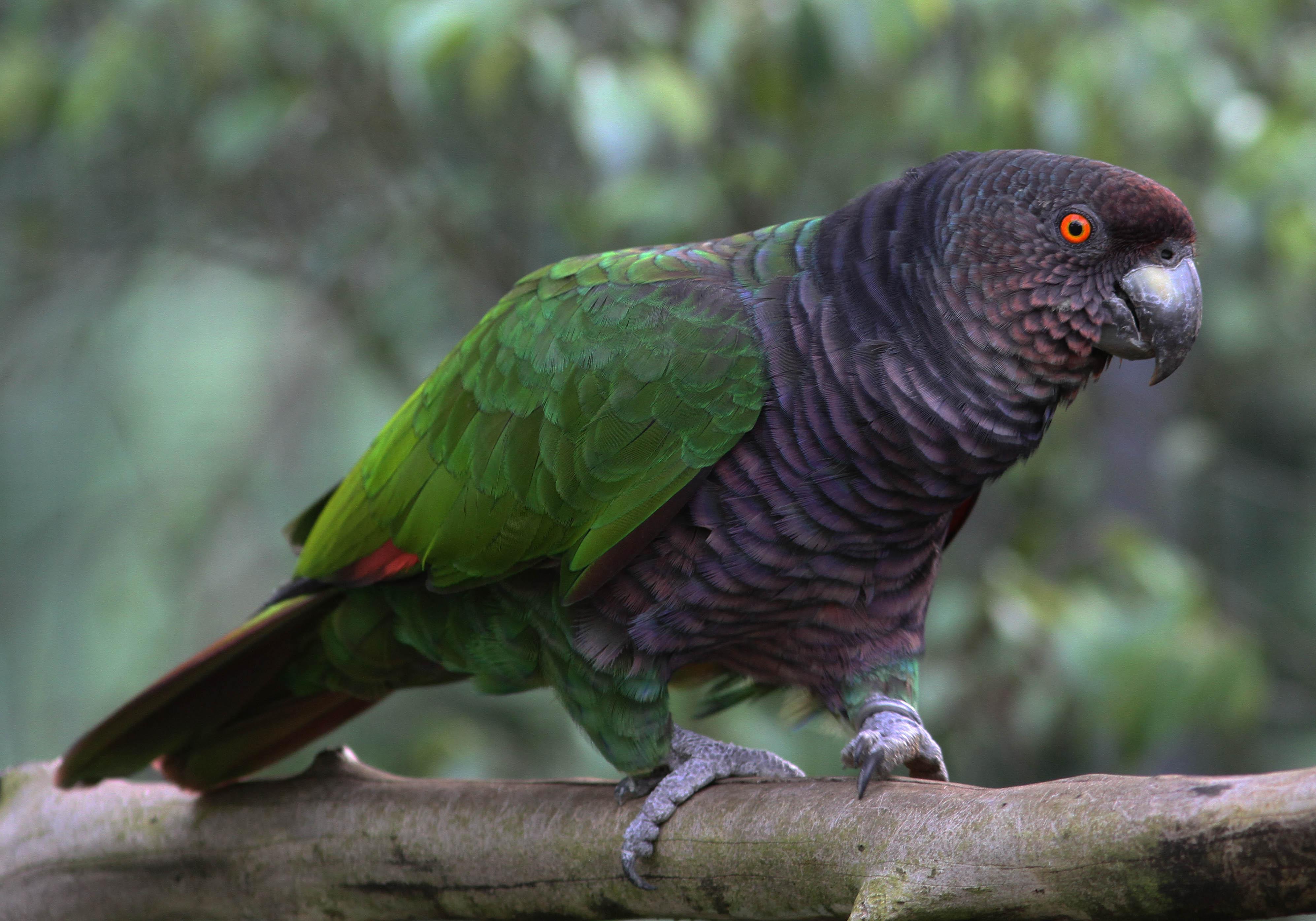 oiseaux sauvages photos