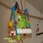 balançoires avec armature en métal pour perroquets.