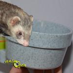 Gamelle Crock (Savic) pour furet, rongeur, lapin et oiseau