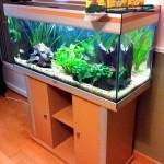 Comment choisir un aquarium d'eau douce ?