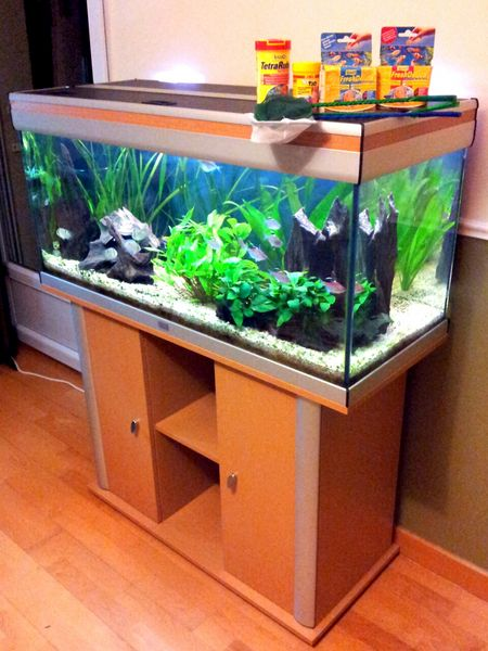 comment faire un aquarium eau douce. Black Bedroom Furniture Sets. Home Design Ideas