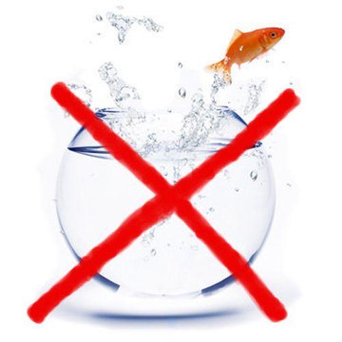 D buter avec un aquarium d eau douce choix du bac type for Filtre pour aquarium boule