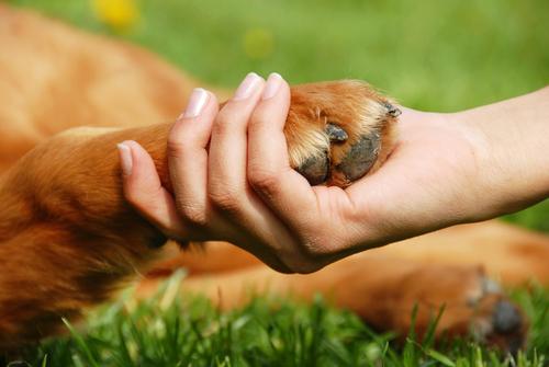 Comment identifier et soigner l'arthrite chez le chien ?