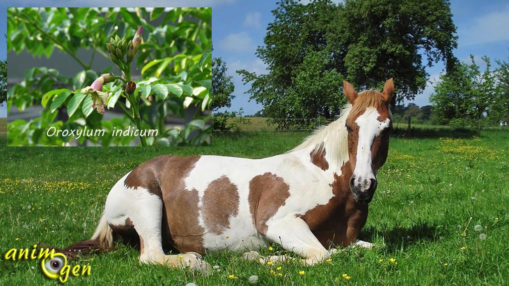 Cheval vers et vermifuges naturels le pouvoir des for Vers dans les plantes