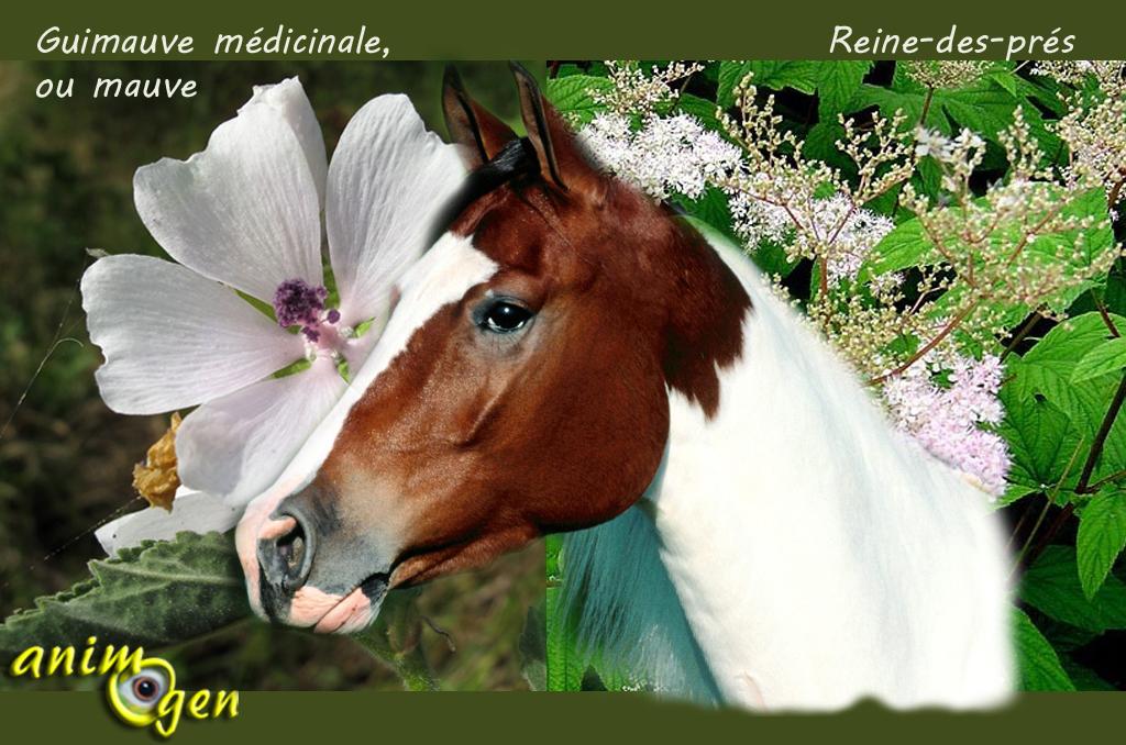 Les plantes comme vermifuges naturels pour les chevaux