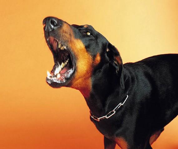 La législation relative aux chiens mordeurs
