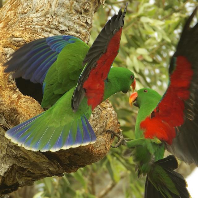 Le comportement en communauté des perroquets dans la nature