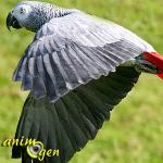 Le comportement de fuite chez les perroquets