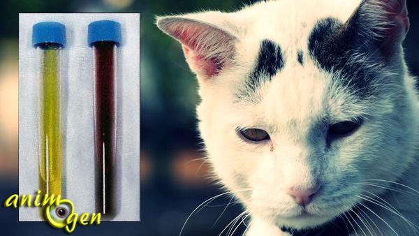 Santé : la cystite aigüe chez le chat (causes, symptômes, traitement)