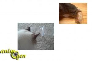 Les jouets de foraging pour chats : intérêt, utilité et fabrication maison