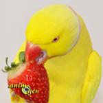 Alimentation : les fruits frais autorisés pour nos perroquets