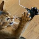Idées de jeux pour chats à fabriquer soi-même