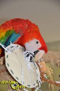 Le lapin, un jouet de foraging pour perroquet à fabriquer soi-même avec des assiettes en carton