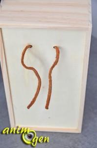 Perroquets : fabriquez une boîte à trésor avec une boîte à mouchoirs