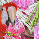Fabriquez un jouet-fleur pour vos perroquets