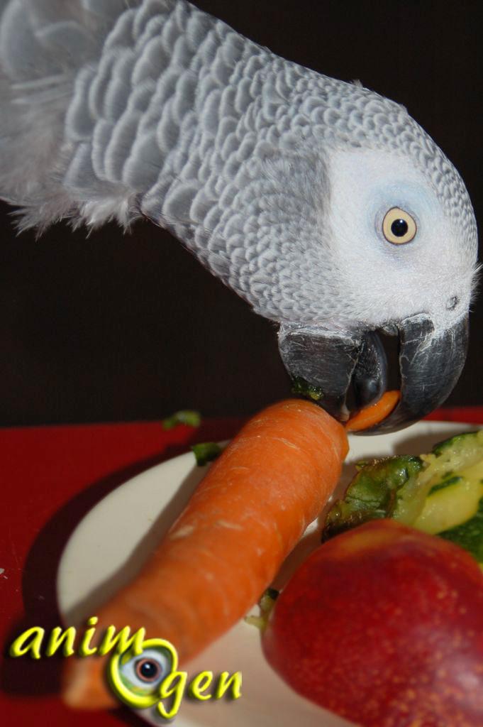 liste des légumes comestibles sans danger pour les perroquets
