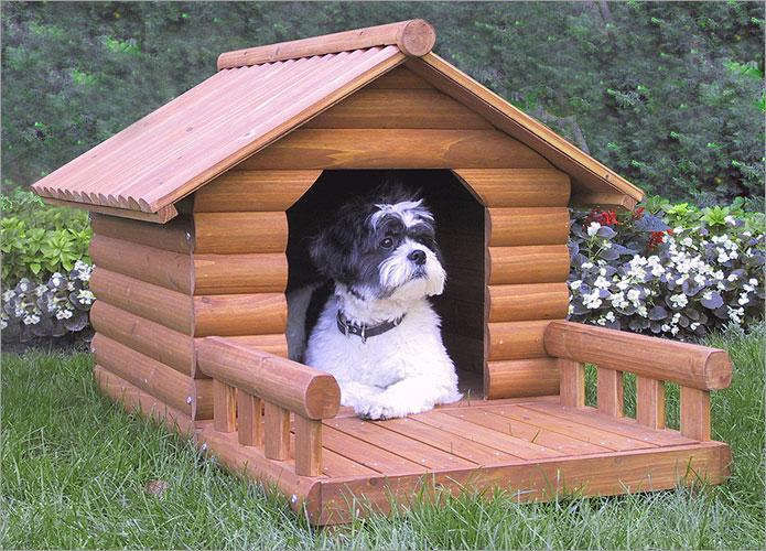 Utilité et choix de la niche pour les chiens