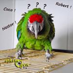 Faut-il changer le nom d'un perroquet que l'on adopte ?