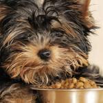 Resto Animo crée la première banque alimentaire pour les animaux de compagnie et leur maître à Tours