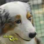 Portrait d'éleveur : Eric Attia, éleveur de chiens (Benito Farm)