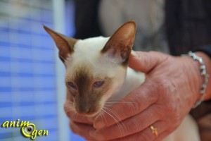 La Chatterie des 6 Noyers, interview sur le Salon Animal focus
