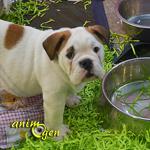 AnimOgen vous fait visiter le salon Animal Focus 2013, à Nice