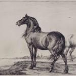 """A la découverte de l'exposition """" Vivre avec les animaux au XVII ème siècle """", à Paris (75)"""