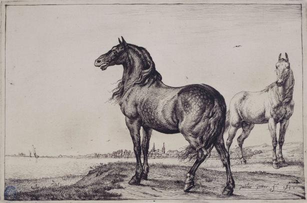 Vivre avec les animaux au XVII ème siècle