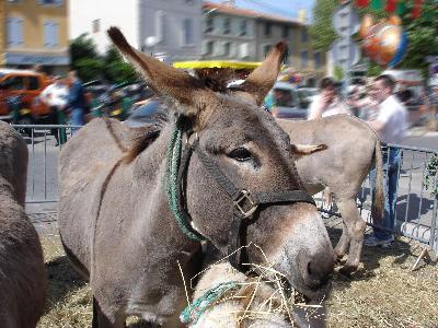 Fête de l'Âne et des animaux de la ferme à Roquevaire (13), mercredi 01 mai 2013