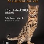 Exposition Féline à Saint Laurent du Var (06), samedi 13 et dimanche 14 avril 2013