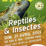 Expo reptiles et insectes