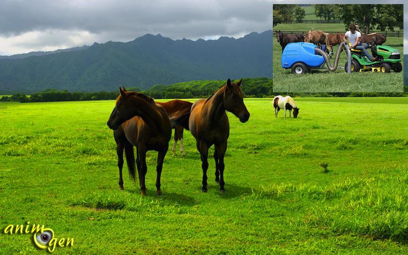 santé-vers-nématodes-helminthes-parasites-cheval-chevaux-poneys-ânes-pré-dosage-équidés-animal-animaux-compagnie-animogen-8