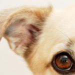 Secrets et astuces de l'éducation canine : une question de calme