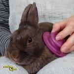 La brosse massante Zolux, une astuce pour nos lapins