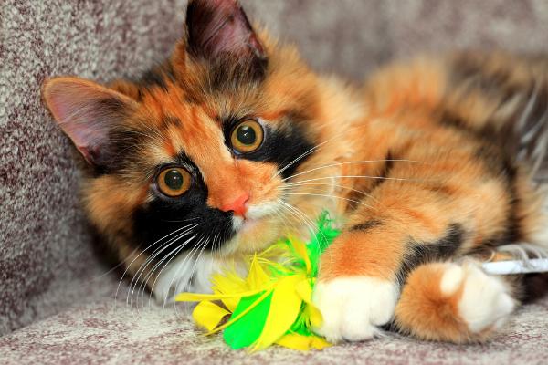 Education et comportement : pourquoi jouer avec votre chat ?