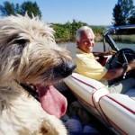 Les animaux de compagnie responsables d'accidents de voiture chez les personnes de 70 ans et plus