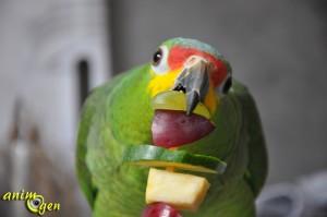 Brochettes de fruits et légumes maison : comment distraire vos perroquets tout en leur apportant des vitamines