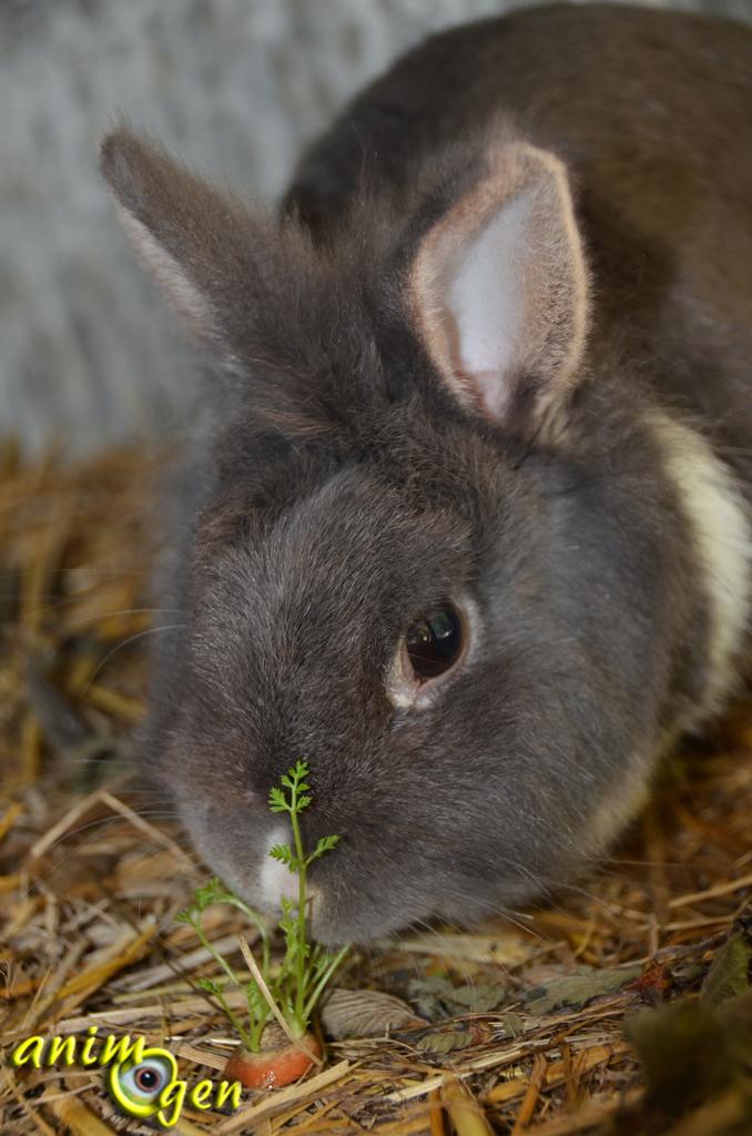 """Alimentation : faites pousser des fanes de carotte """" maison """" pour vos lapins et rongeurs"""