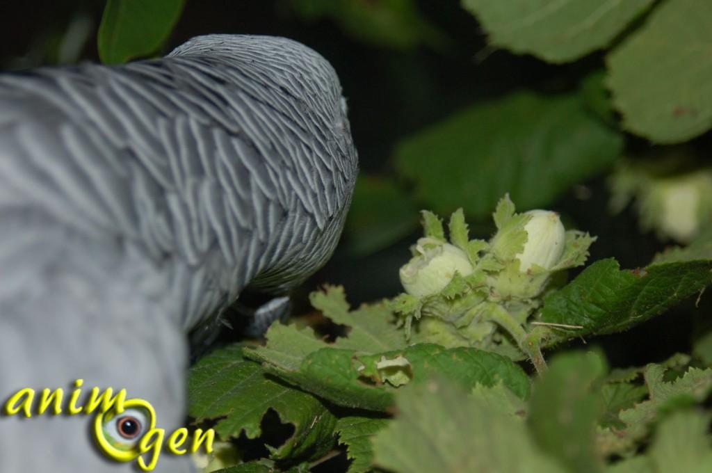 Bois toxiques et non toxiques pour les perroquets (liste)