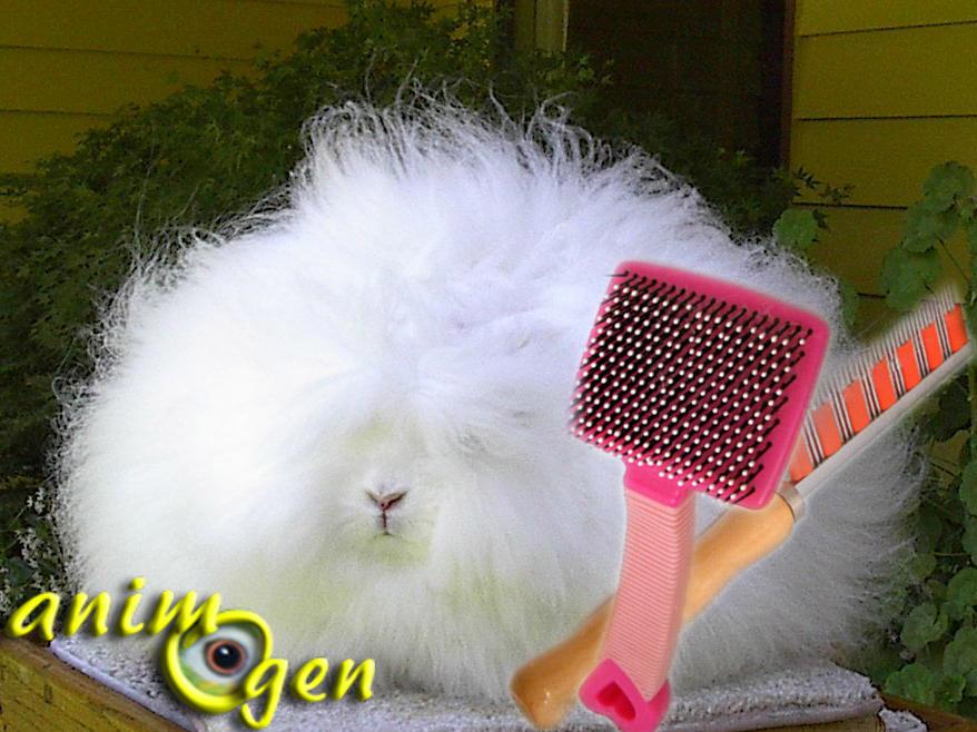 Entretenir le pelage des lapins par le brossage