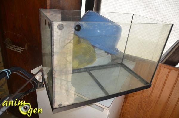 accessoire pour rongeurs comment fabriquer une cage 224 partir d un aquarium animogen