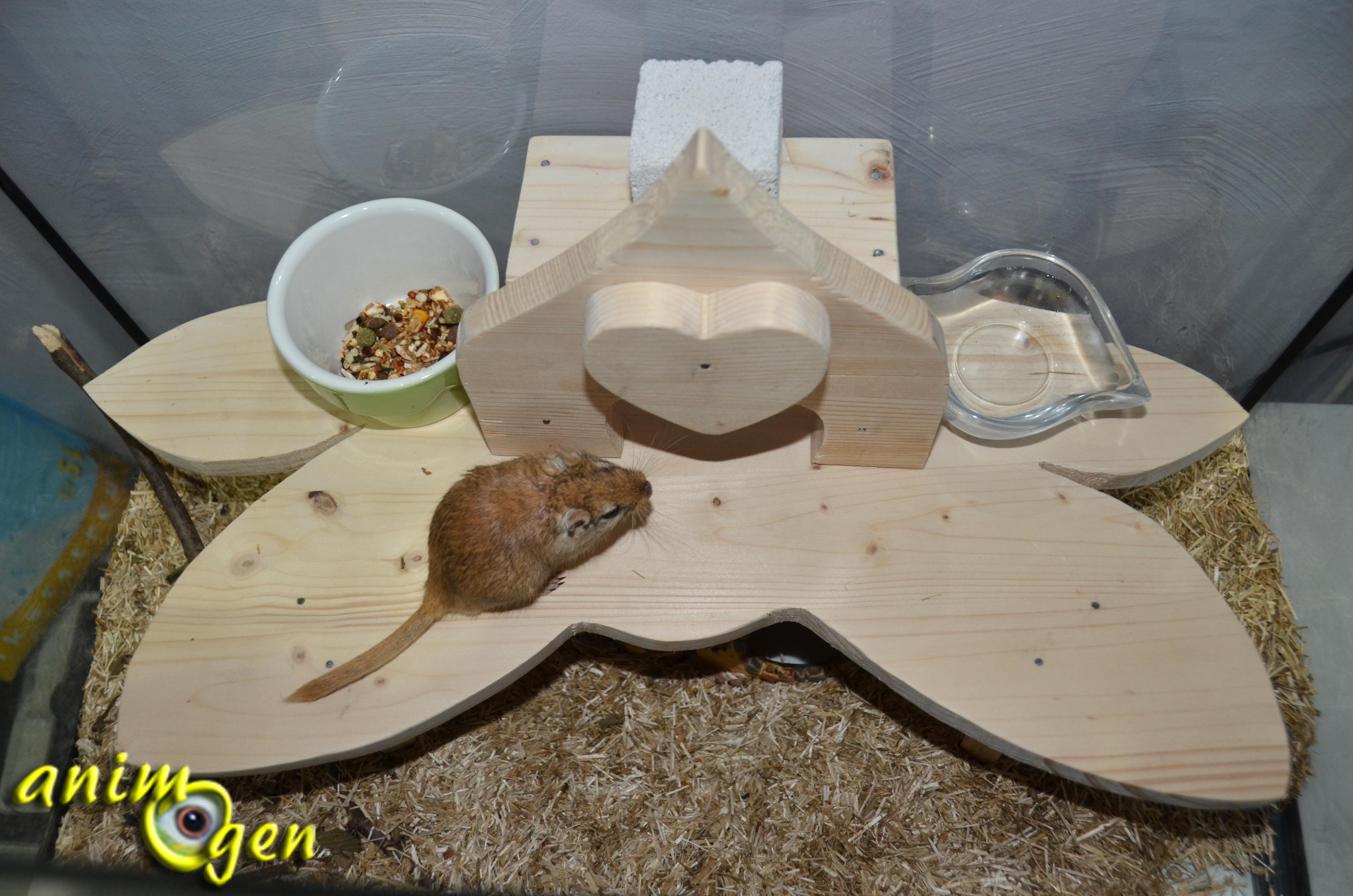 Accessoire pour rongeurs comment fabriquer une - Fabriquer une chevre pour couper le bois ...