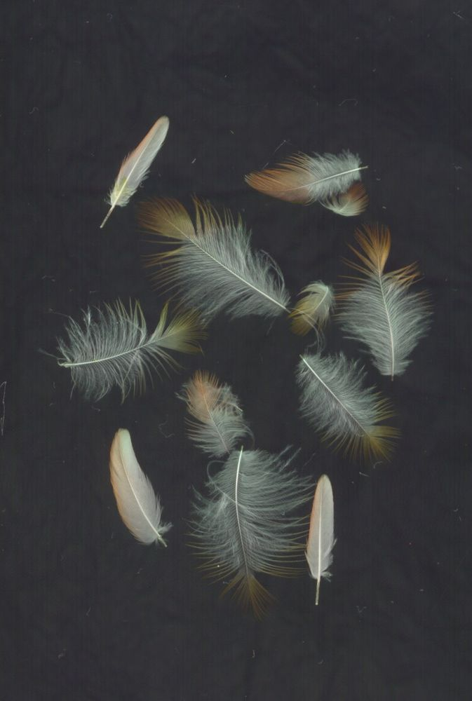 Santé des plumes : les différentes causes de la mue chez le canari