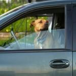 Soleil et voiture : la mort au rendez-vous pour votre chien