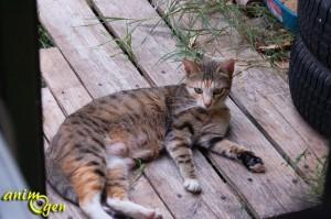 Santé : comment savoir si une chatte est en chaleur ?