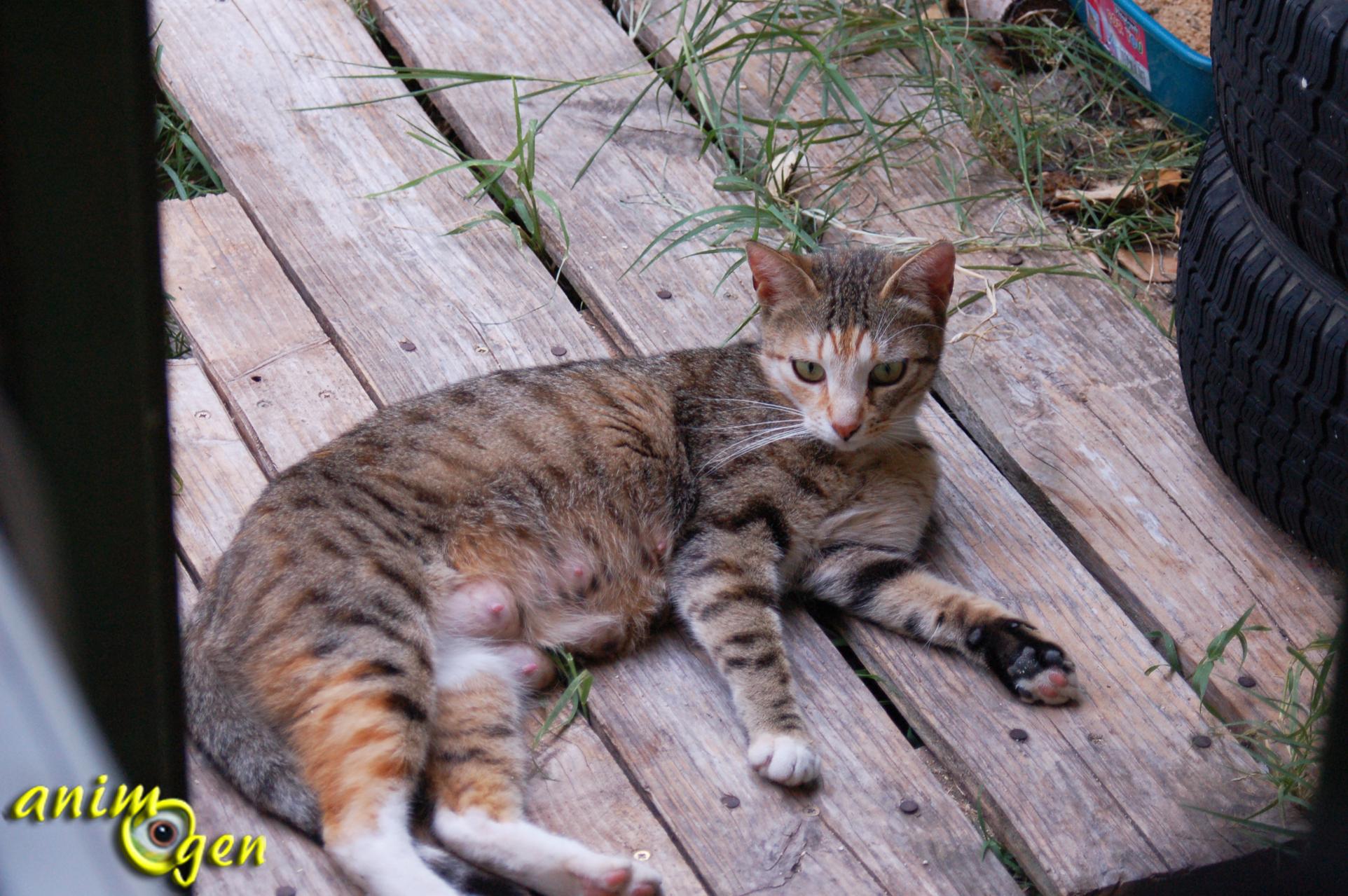 Sant comment savoir si une chatte est en chaleur - Comment savoir si une pasteque est mure ...